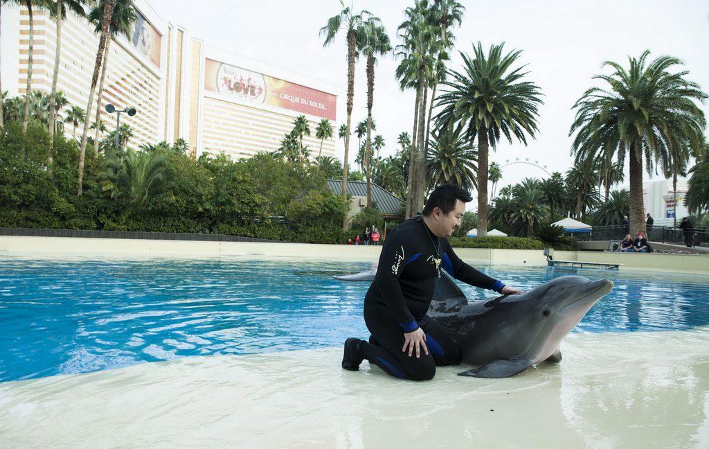 "Surprise Winner Enjoys Dolphin Habitat's ""Trainer for a Day"" at The Mirage Hotel & Casino - LVCVA"