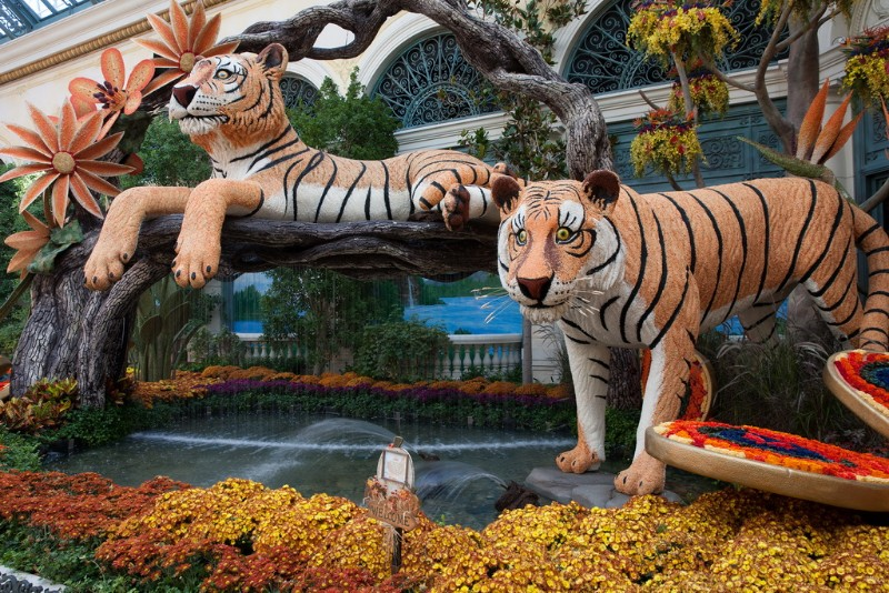 Bellagio-Conservatory-2018-Fall-Display-01