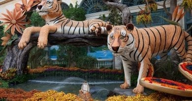 Bellagio Conservatory 2018 Fall Display