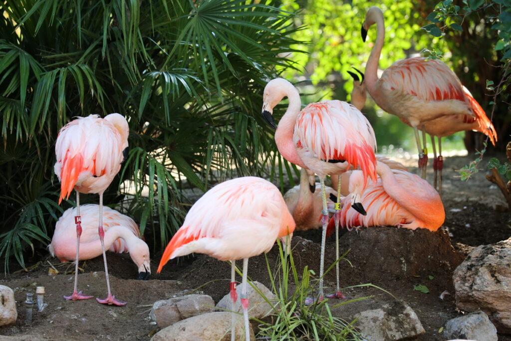 The Flamingo Wildlife Habitat 1024x683