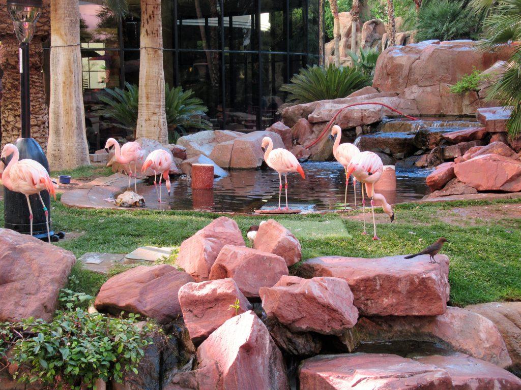 The Flamingo Wildlife Habitat 2