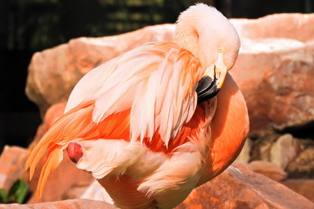 The Flamingo Wildlife Habitat 6 1024x684