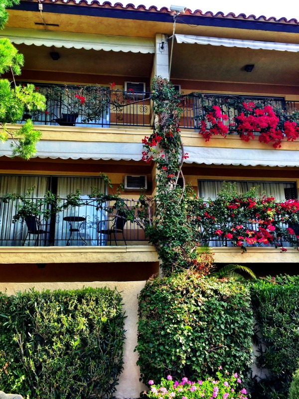 Hotel-Pepper-Tree-Front-of-Building